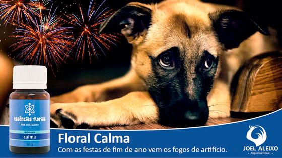 Festas de fim de ano - cuidado com fogos de artifício